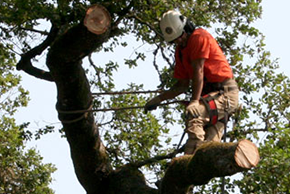 Contact Us | Pacific Slope Tree Cooperative Inc. - San Rafael, CA